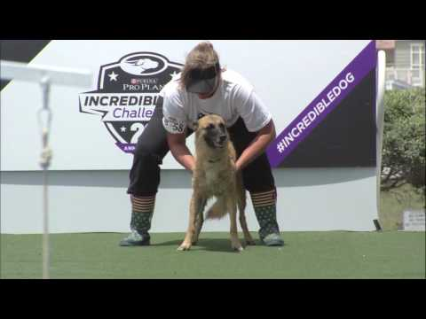 Fetch It Competition - 2017 Purina® Pro Plan® Incredible Dog Challenge® Western Regionals