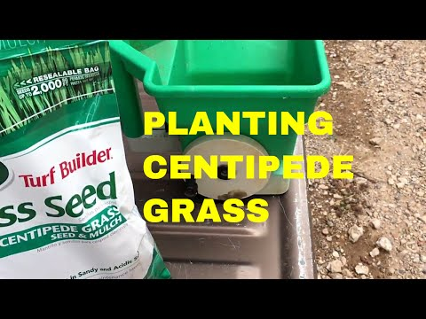 Planting A Centipede Lawn~ Southern Lawn Grasses