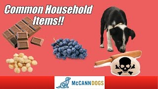 Dangerous Household Poison Hazards For Your Dog
