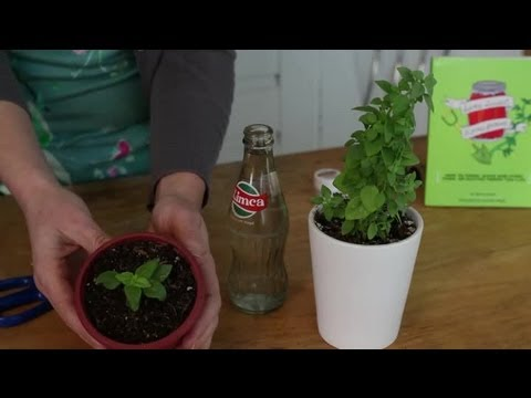 How to Root Plant Cuttings in Water : Indoor Planting