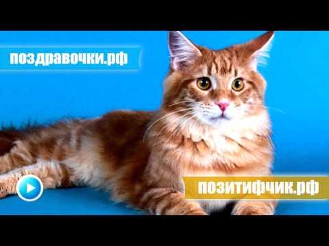 Почему урчат кошки, что значит если кот мурчит, котенок