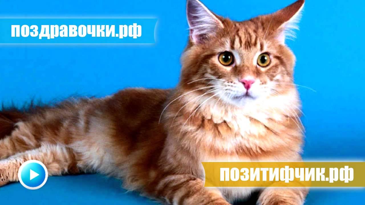 Котенок смотрит приколы с котами