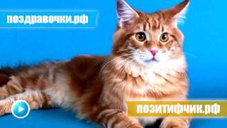 Кот громко мяукает - прикол над своим котом ))