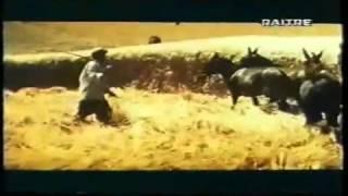 Il mondo contadino degli anni 50