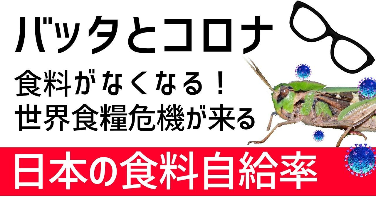 【バッタ続報と世界食糧危機】日本は大丈夫?日本の食料自給率とサバクトビバッタ続報など【食糧安全保障】