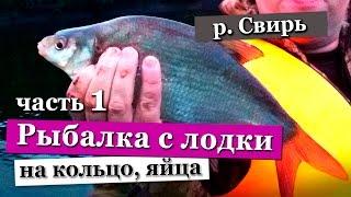 Ловля леща на кольцо  яйца  Рыбалка на реке Свирь 2016(Видео отчет о рыбалке на реке Свирь на такую снасть как кольцо, в моем случае на яйца. Выезд состоялся на..., 2016-06-03T14:47:43.000Z)