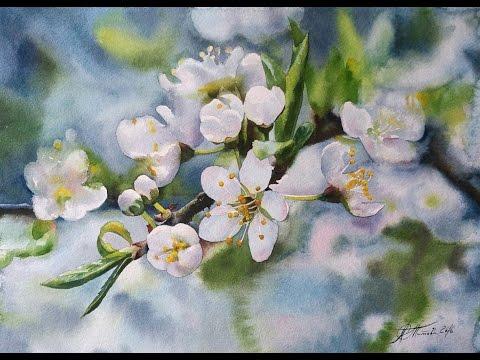 Рисуем акварелью: Веточка цветущей яблони