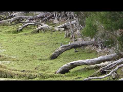 Snake Island Hog Deer Hunting Ballot Period Four 20-24 March 2017