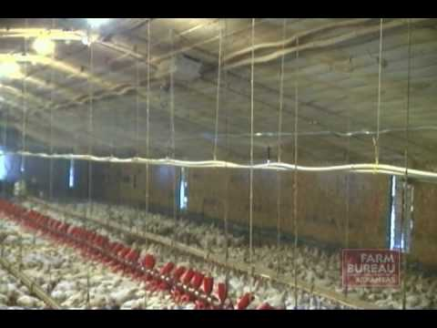 Chicken House Farm arkansas farm bureau - poultry house cooling systems - youtube