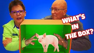 WHAT'S IN THE BOX CHALLENGE (ANIMALI) - Leo Toys
