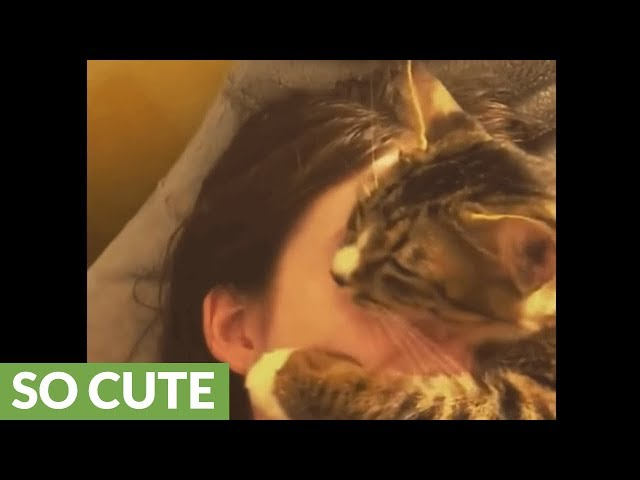 Overly affectionate kitty can't stop hugging owner's face