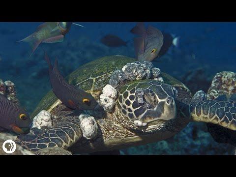 Scientists Go On A Mission To Save Sea Turtles Doovi