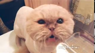 Repeat youtube video That's why I love cats! (Миллион причин любить котов)