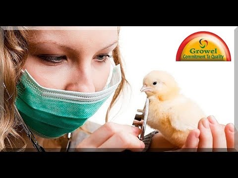 Basics of Poultry Health Management