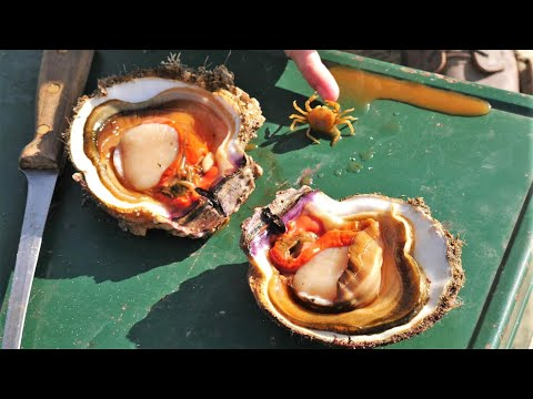 CATCH And COOK! Diving For A Smörgåsbord Of Sea-life! *SCALLOPS, SNAILS, FISH, CRAB, URCHIN*