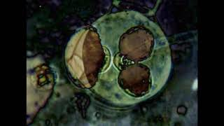 appelblauwzeegroen