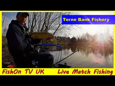 FishOn TV UK : Live Match Fishing : Torne Bank Fishery : How To Land A Lump On Light Line!