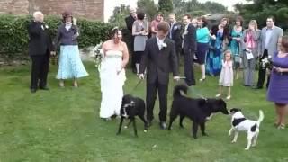 Пес пометил невесту