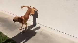 Iq K9 Training | Oceanside Dog Training | Shotgun And Bret Geller | Puppy Training