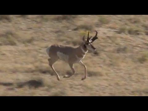 Antelope Hunting In Wyoming