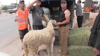 Le360.ma • Ces personnes à éviter lorsque vous achetez un mouton