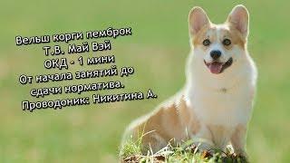 Дрессировка собаки ОКД + выставка собак,г.Ростов, вельш корги пемброк Май Вэй
