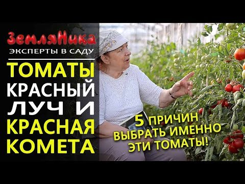 Томаты Красная Комета и Красный Луч F1. Агрофирма Ильинична. Лучшие индетерминантные сорта.