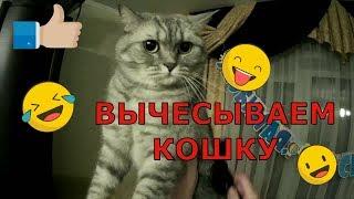 Вычесывание шерсти кота кошки Как вычесывать кота кошку