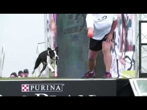 Diving Dog 1st Place - Incredible Dog Challenge 2015 Huntington Beach, CA