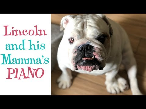 Lincoln and his Mamma's piano | ENGLISH BULLDOG