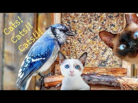 PURRRfect Mini Video For Cats - Wet BIRDS FEEDING,  CHIRPING - How to Activate Your FELINE Friend