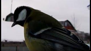 Простая кормушка для птицы своими руками | Синицы воробьи и сороки.