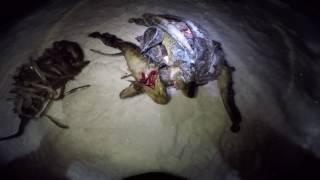 Зимняя ночная рыбалка на налима декабрь 2016 года / Winter night fishing for burbot December 2016(Рыбалка происходила на незнакомом озере, утром был отправлен человек на разведку по поводу ловли живца...., 2017-01-02T06:00:00.000Z)