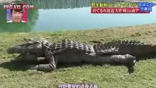 VIDEO Lucu Nyamar Jadi Buaya Jepang Jahil [ Asli Ngakak]
