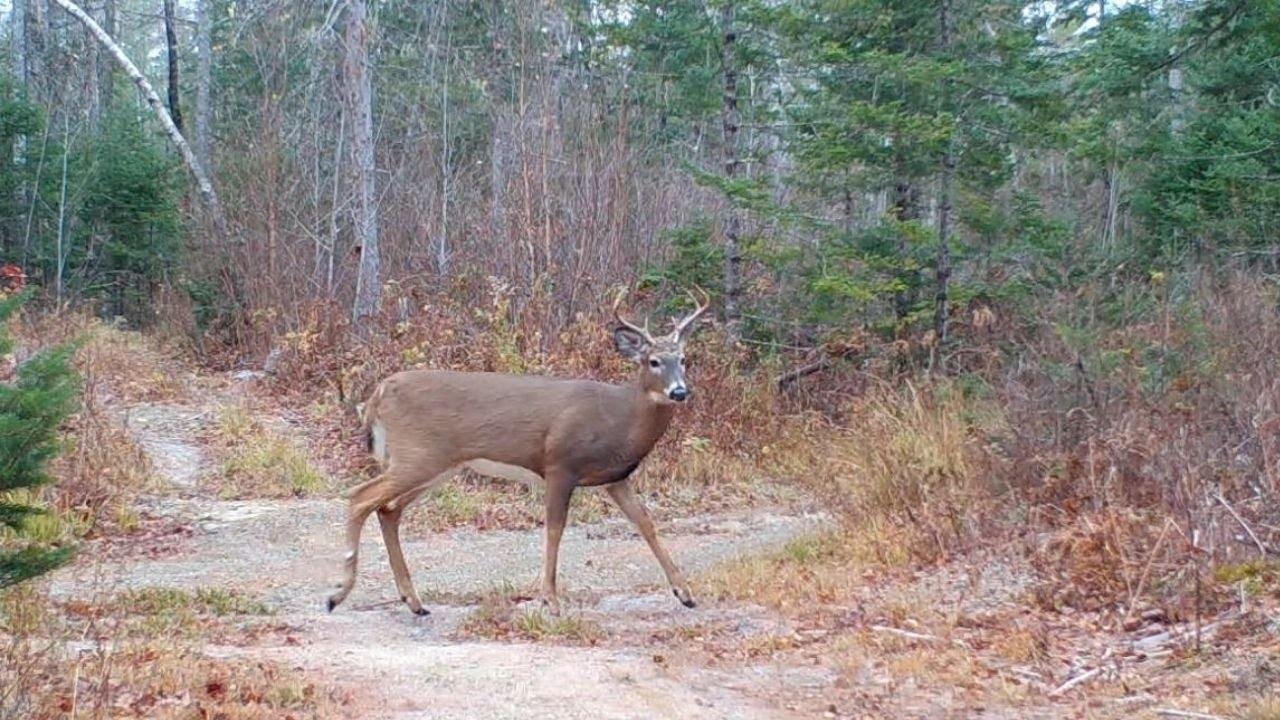 Maine Wildlife Trail Video week ending 11.6.2020