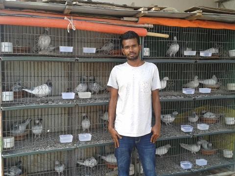 Shafiq pigeons loft part 2 - by Pigeons Market.Net pigeons video