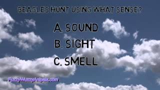 Beagle Animal Quiz For Kids