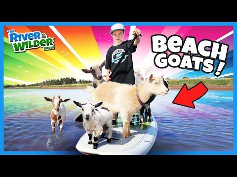 Beach Goat Paddleboard WORLD RECORD!? Kids Family Fun.
