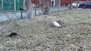 Коты ебутся !!!!!!