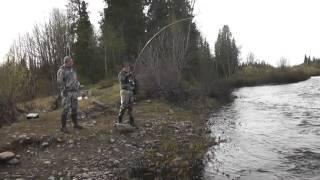 Риболовля на сьомгу, 2016 рік