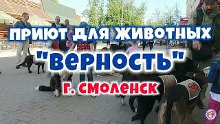 """Приют для животных """"Верность"""" г. Смоленск"""