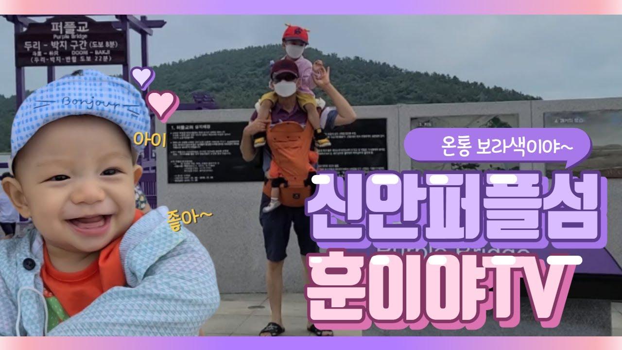 신안퍼플섬 온통 보라색 천지~ 훈이야TV