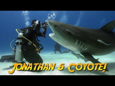 Tiger Sharks with Coyote Peterson! | JONATHAN BIRD'S BLUE WORLD