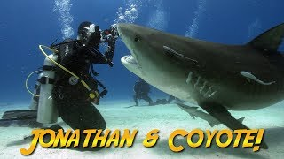 Tiger Sharks with Coyote Peterson! | JONATHAN BIRD