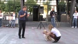 Выствка беспородных собак в Смоленске