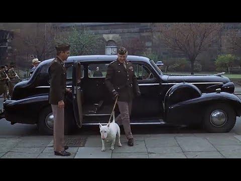 Il feroce cane da combattimento del generale Patton