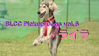BLCC ルアーコーシング Pickup Dogs vol 6 サルーキ ライラ BLCC HP ht...