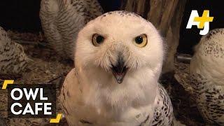 Tokyo's Owl Cafe