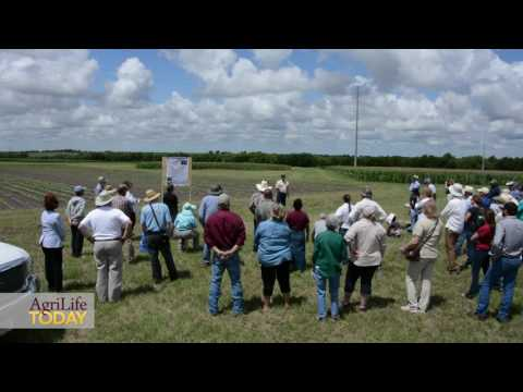 2017 Field Day at Texas A&M AgriLife Research and Extension Center, Temple