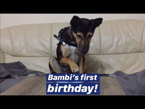Adorable Moment When our Beagle Dogs Welcome Newborn Baby from YouTube · Duration:  5 minutes 24 seconds